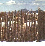 Standard coyote fence with small lodgepole poles built by greenleaf forestry
